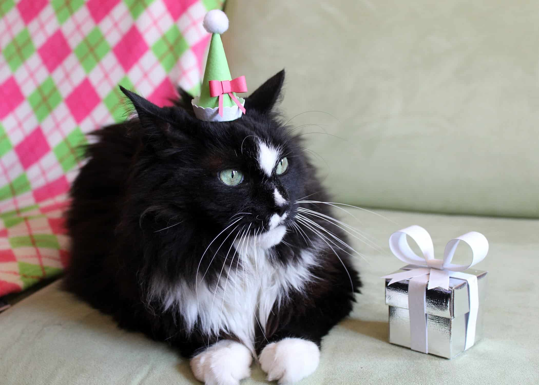 Birthday Party Cat