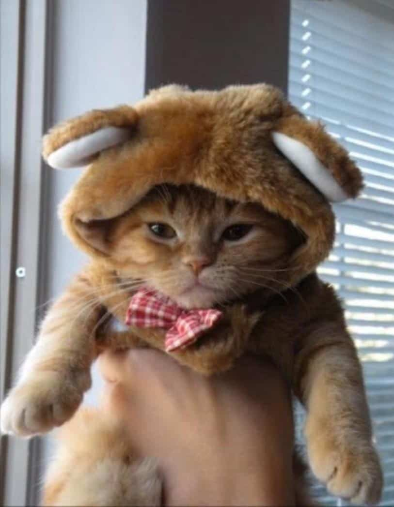 Kittens Wearing Funny Hats Song , Cute Cats in Hats