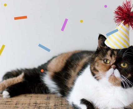 Pudge Birthday Hat Cat